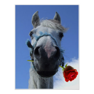White horse with red rose between lips humerous poster
