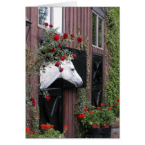 White Horse with Roses