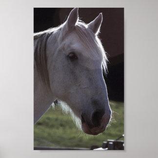 White Horsehead Poster