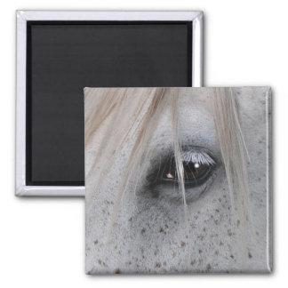 White Horse's Eye Equine Photography Refrigerator Magnet
