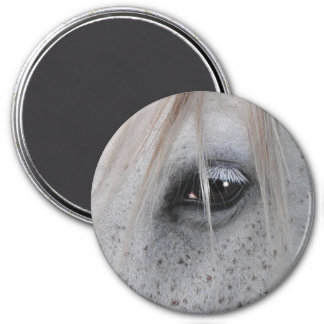 White Horse's Eye Equine Photography Magnet