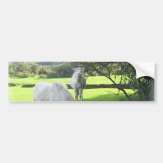 White Horses Grazing Bumper Sticker