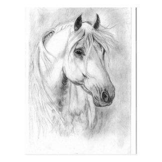 White Horses head Postcard