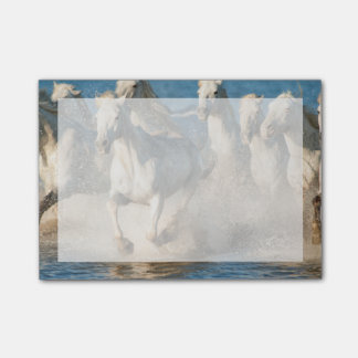 White horses of Camargue, France Post-it® Notes