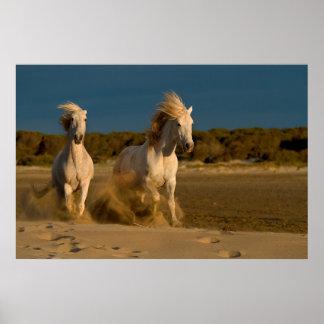 White Horses Running On Beach | Camargue, France Poster