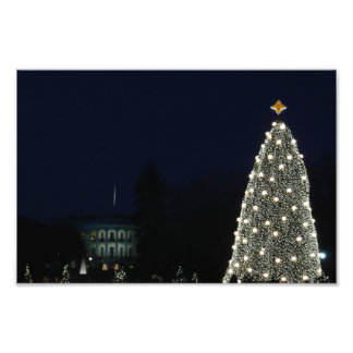 White House and National Tree Photo Print