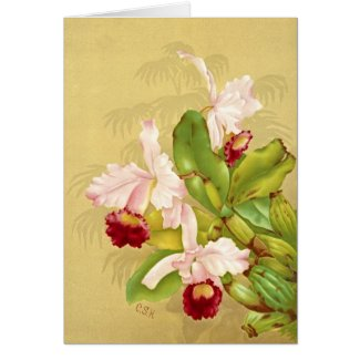 White House Orchid 1892 Greeting Card
