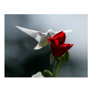 White Hummingbird Postcard