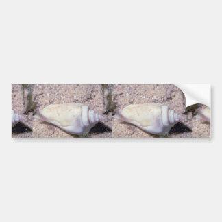 White hump-back conch (Strombus gibberculus albus) Bumper Sticker