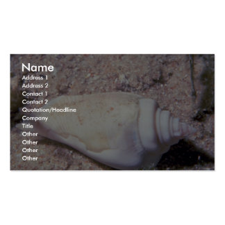 White hump-back conch (Strombus gibberculus albus) Business Card Templates