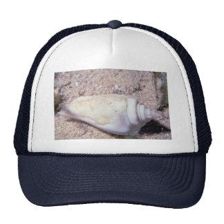 White hump-back conch (Strombus gibberculus albus) Hat