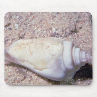 White hump-back conch (Strombus gibberculus albus) Mousepad