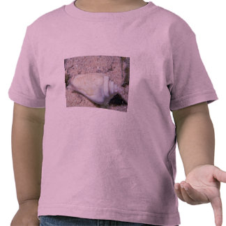 White hump-back conch (Strombus gibberculus albus) Shirts