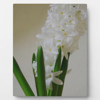 White Hyacinth Display Plaque