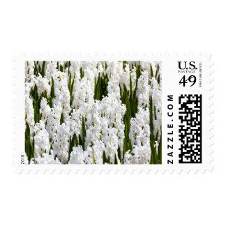 White Hyacinths Medium Postage Stamp