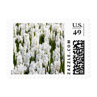 White Hyacinths Small Postage