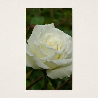 White Hybrid Tea 'Mrs. Herbert Stevens' Rose Business Card