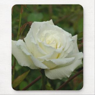 White Hybrid Tea 'Mrs. Herbert Stevens' Rose Mouse Pad