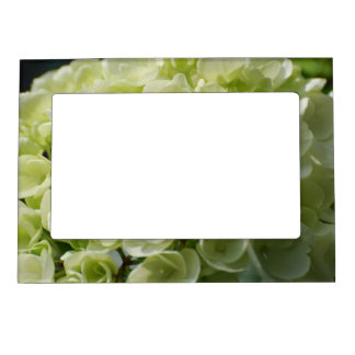 White Hydrangea Blossoms Magnetic Picture Frames