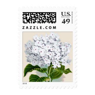 White Hydrangea Botanical Print - Stamp