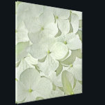 "White Hydrangea Canvas Print<br><div class=""desc"">A pretty canvas featuring a soft image of beautiful white Hydrangea blossoms.  This is a dry-brushed photo; lovely in white with pale accents of green and yellow.</div>"