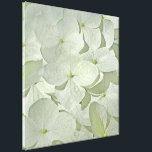 """White Hydrangea Canvas Print<br><div class=""""desc"""">A pretty canvas featuring a soft image of beautiful white Hydrangea blossoms.  This is a dry-brushed photo; lovely in white with pale accents of green and yellow.</div>"""