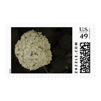 White Hydrangea flower bush postage stamps