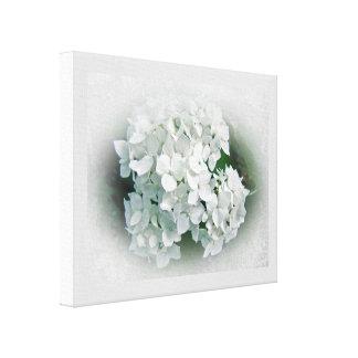 White Hydrangea Flowers Canvas Print