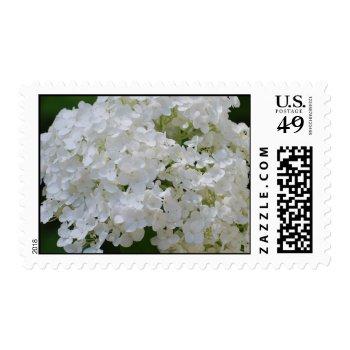 White Hydrangea Postage Stamp by PerennialGardens at Zazzle