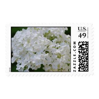 White Hydrangea Postage Stamp