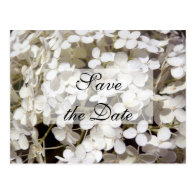 White Hydrangea Save the Date Announcement Postcards