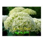 White Hydrangea Save The Date Postcard