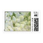 White Hydrangea Stamp
