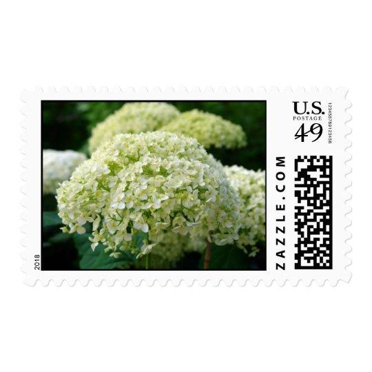 White Hydrangea Stamps
