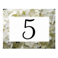 White Hydrangea Table Numbers Post Card