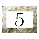 White Hydrangea Table Numbers Postcard