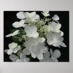 "White Hydrangeas ""Still Life"" Print"