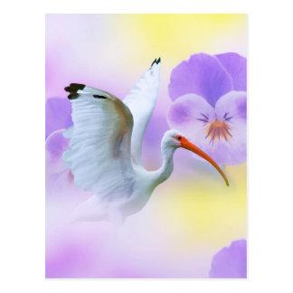 White Ibis and Pansies Postcard