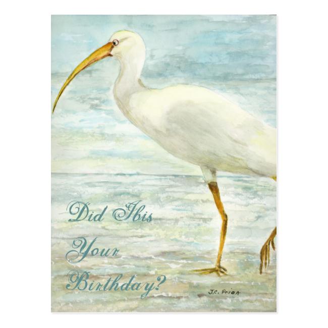 White Ibis Beach Postcard Did Ibis Your Birthday?