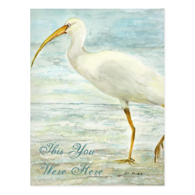 White Ibis Beach Postcard