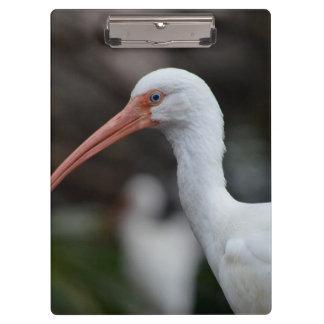 White ibis blue eyed bird feather image clipboard