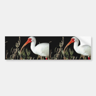 White ibis bumper stickers
