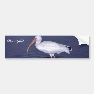 White Ibis Bumper Sticker