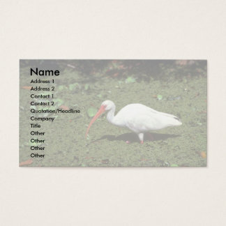 White Ibis Business Card