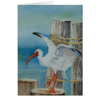 White Ibis by Peggy Allen Greeting Card
