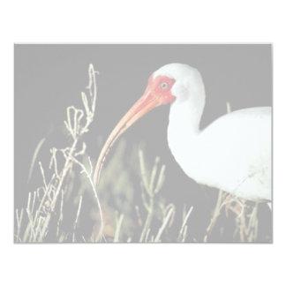 White ibis card