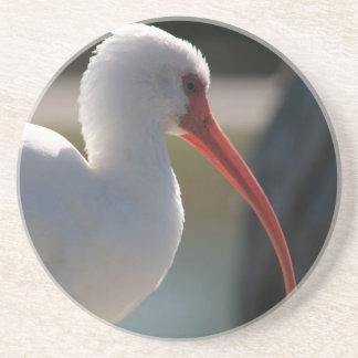 White ibis head picture , orange beak bird drink coasters