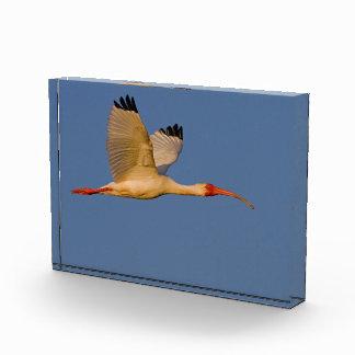 white ibis in flight award