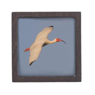 White Ibis in Flight Gift Box