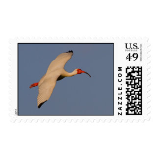 White Ibis in Flight Stamps